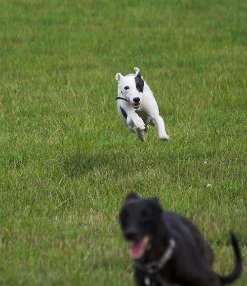 Maggie rennt