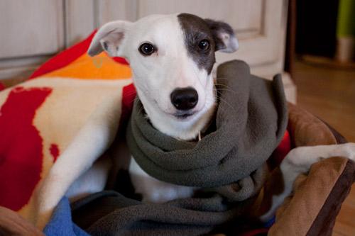 Maggie mit Schal gegen Erkältung