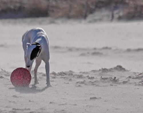 Frisbee im Sturm am Strand