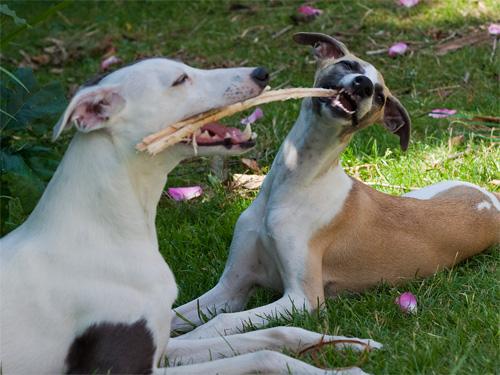 Gemeinsamer Zahnstocher