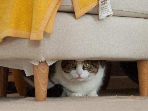 Miro kann nicht glauben, was er da sieht