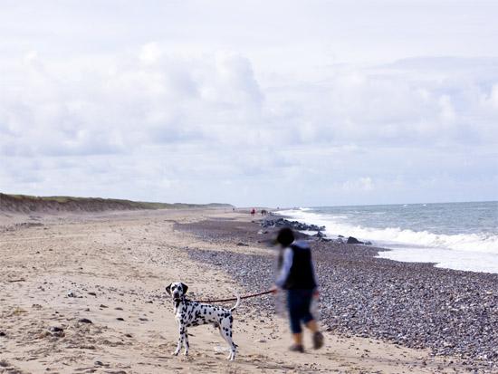 An der kurzen Leine am Strand spazieren gehen