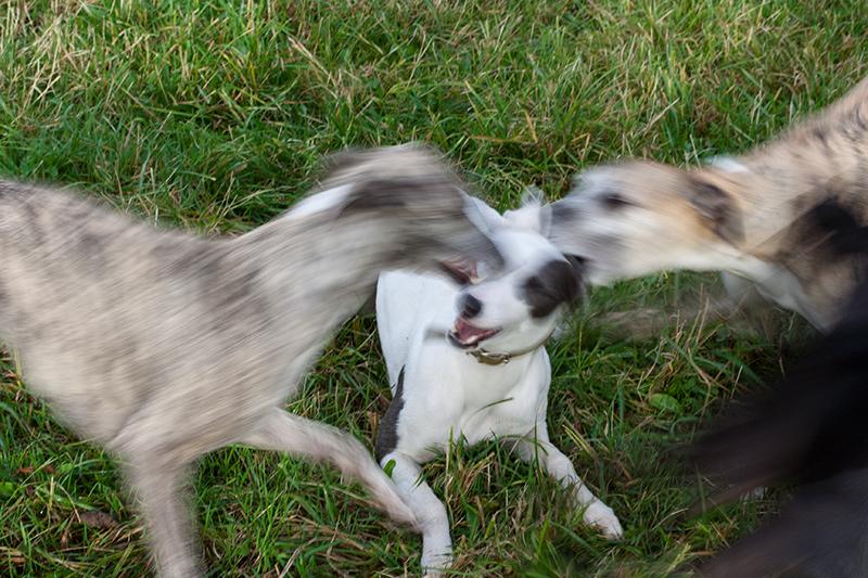Entschuldigung eines Hundebesitzers (Quelle: Facebook)