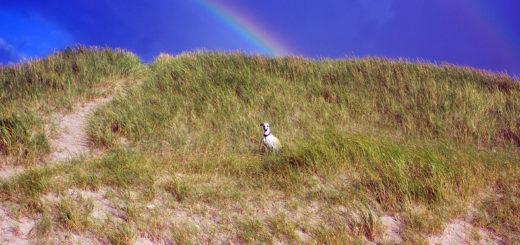Lucy unterm Regenbogen