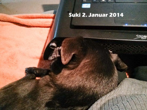 Suki mit am Laptop